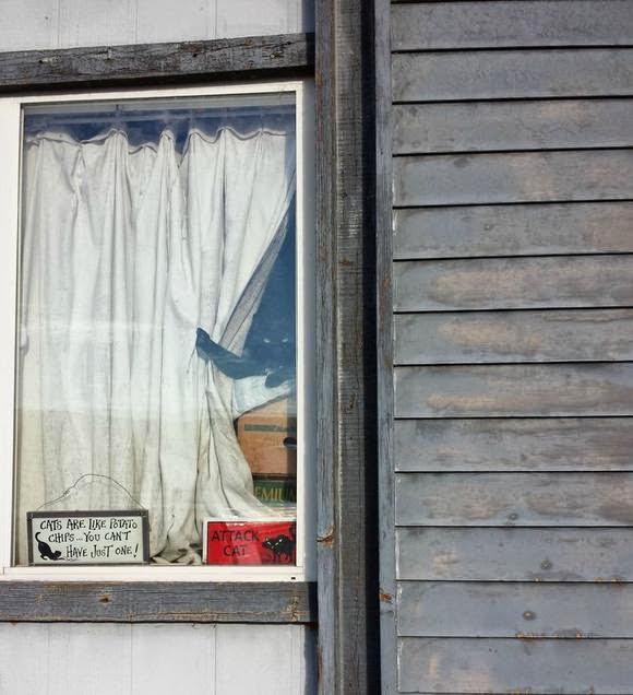 Смешной грозный кот в окне