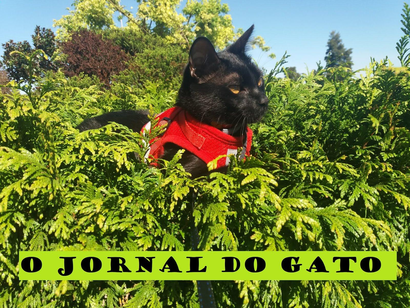O Jornal do Gato