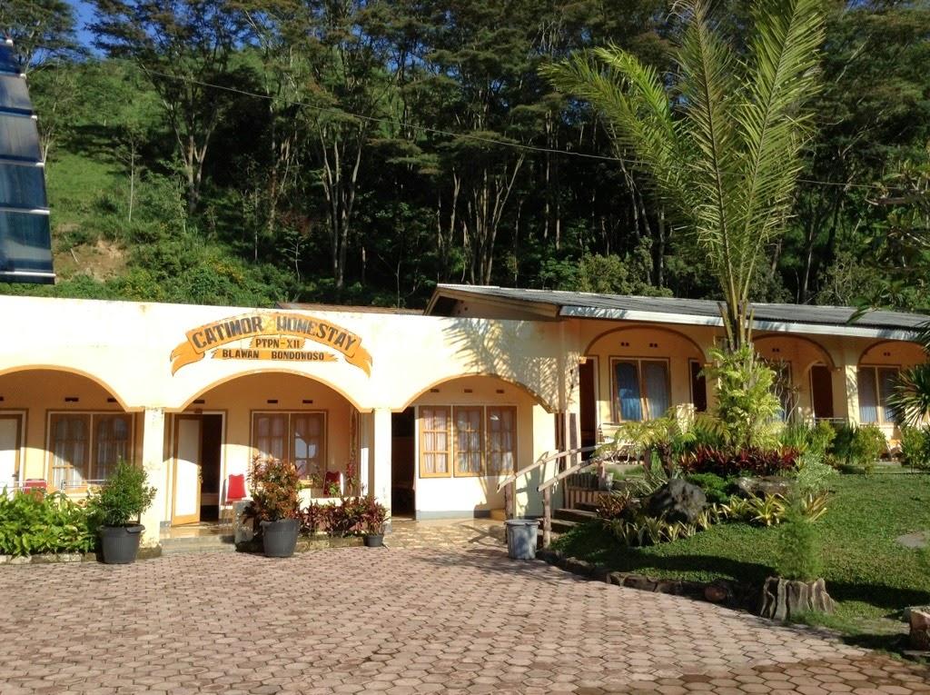 Catimor Home Stay - Blawan - Bondowoso