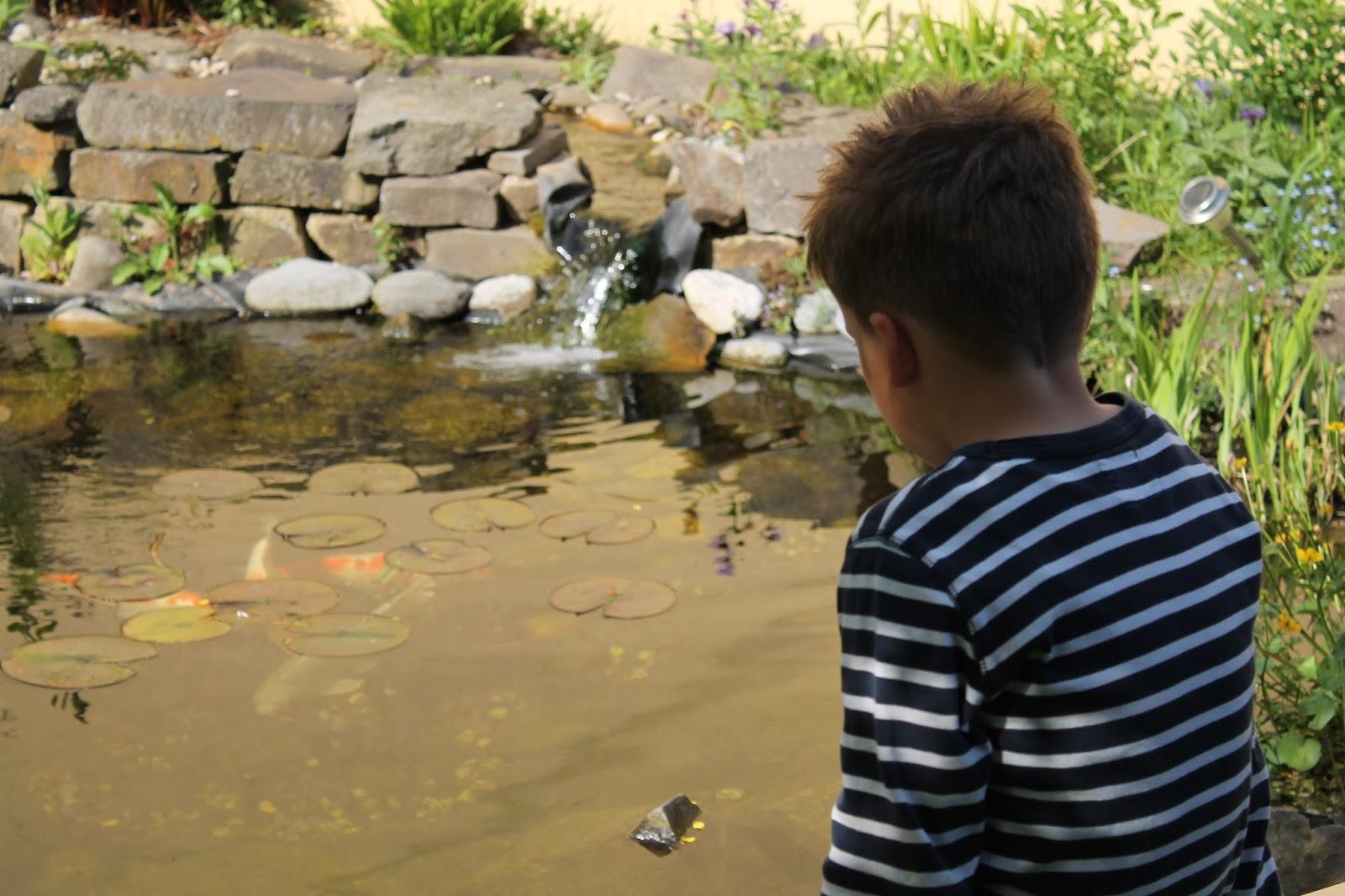 Lieblingsneffe am Teich Koy Karpfen