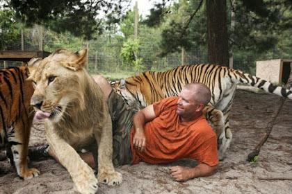 Seram, Pria Ini Tinggal Bersama 14 Kucing Besar