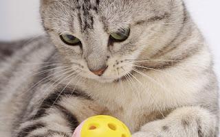 Cuidados y Consejos para Criar Gatos Esterilizados y Saludables