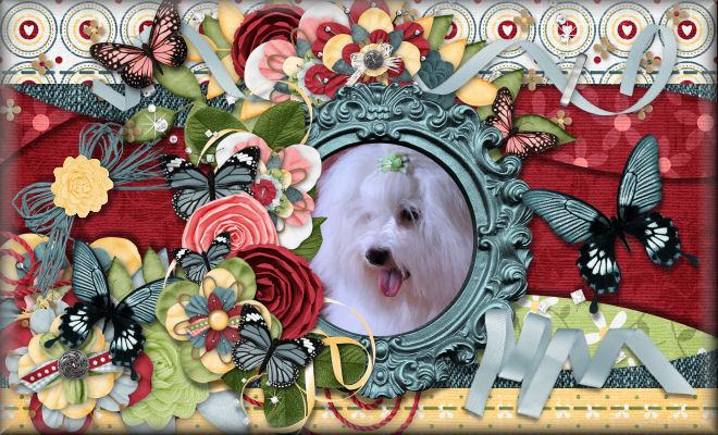 Renaissance Coton de Tulear Puppies Blog