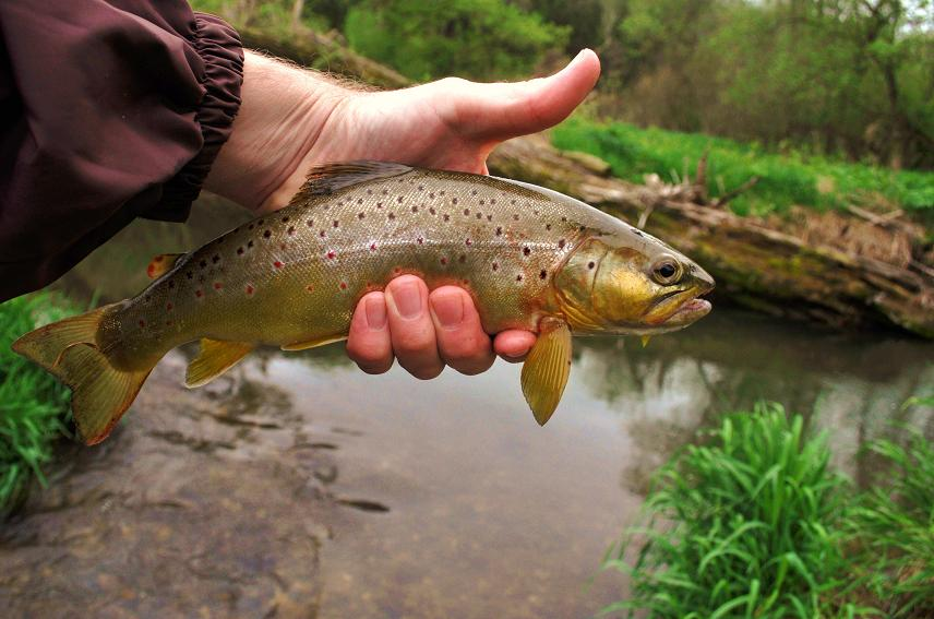 The catching chronicles by trout magee southwest for Driftless fly fishing