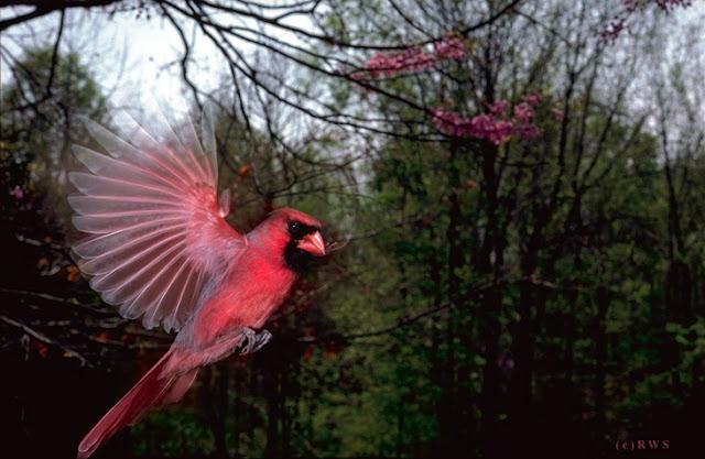 நான் பார்த்து ரசித்த புகைப்படங்கள் சில.... - Page 2 Flying+Birds+%25285%2529