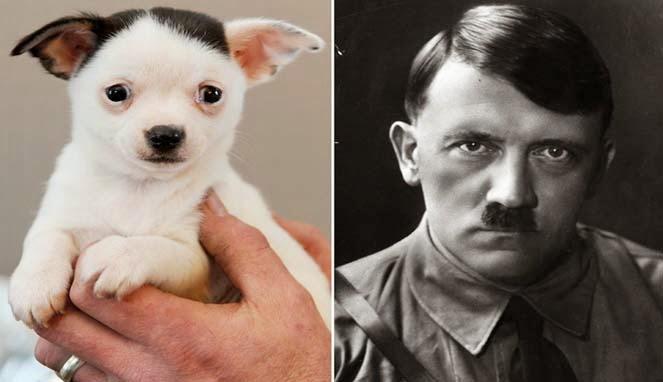 Anak anjing lucu dan imut