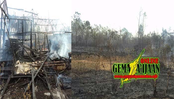 Hutan Terbakar Jamah Rumah Penduduk
