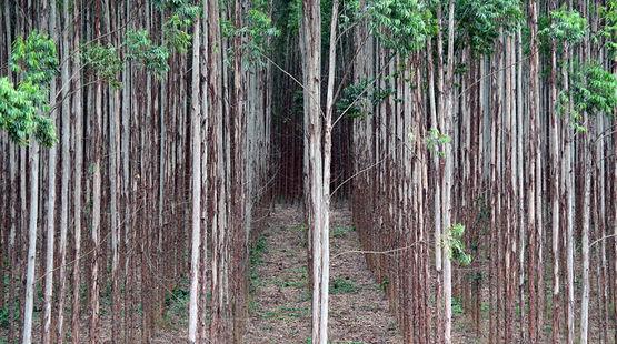 Petisi; Katakan kepada PBB: HTI bukan hutan!