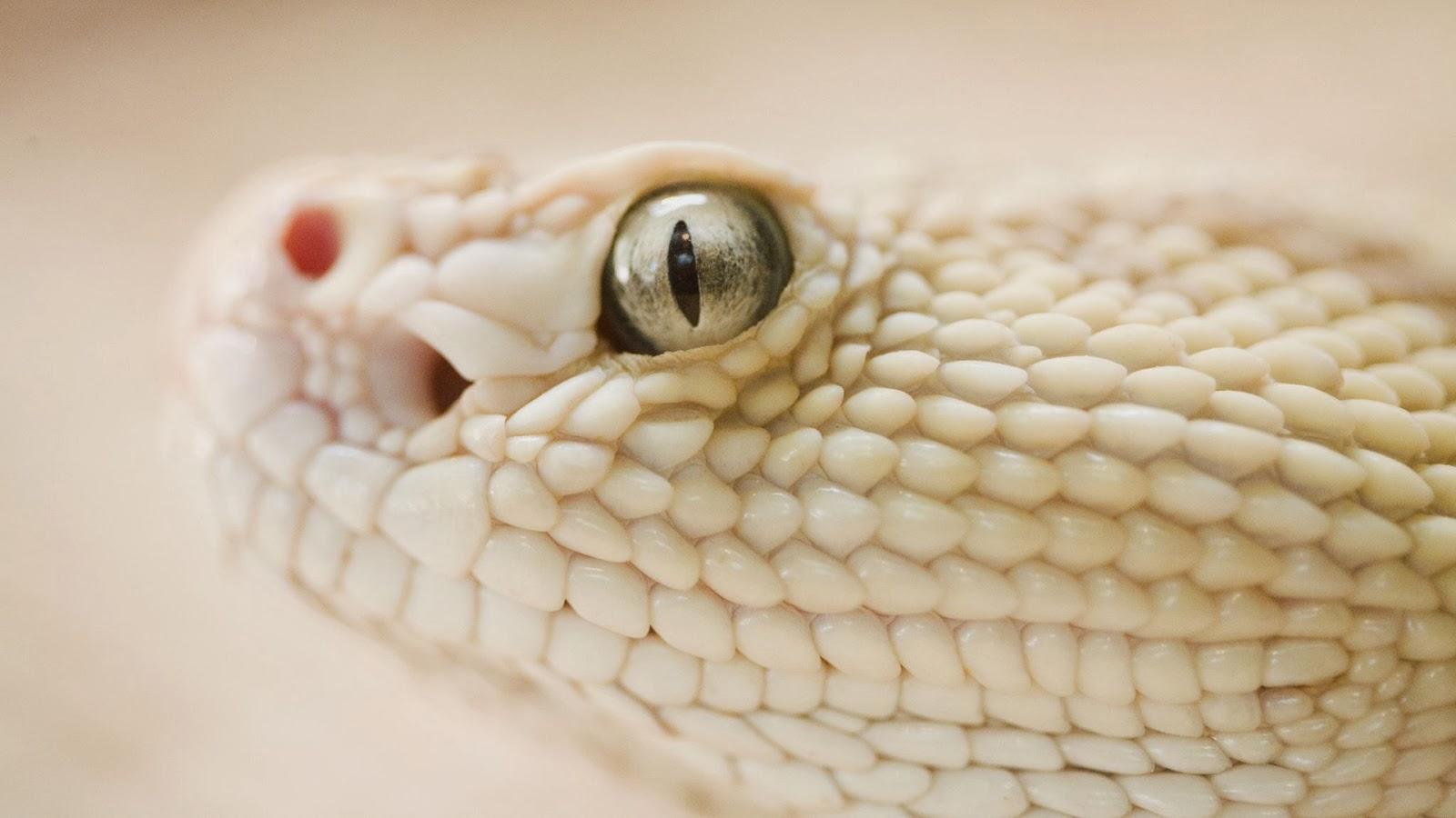 """<img src=""""http://2.bp.blogspot.com/-nqc4p3X49pk/Uukn0FfhcfI/AAAAAAAAKnw/sMl4WEtlm6Y/s1600/snake-wallpaper.jpg"""" alt=""""snake wallpaper"""" />"""