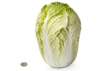 http://2.bp.blogspot.com/-nqphCjapDWU/TwCV7hqPdZI/AAAAAAAAA7o/Rfr1cQvo1qM/s1600/28-chinese-cabbage.jpg