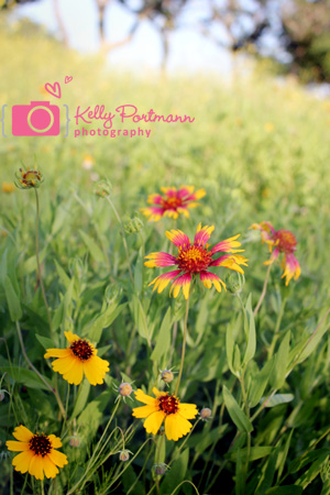 Wildflowers, Texas Hill country, Hillcountry wildflowers, San Antonio Nature Photographer, San Antonio Photographer Kelly Portmann