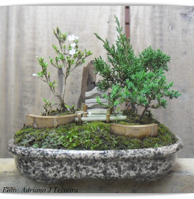 mini jardim oriental : mini jardim oriental:um mini jardim Oriental!