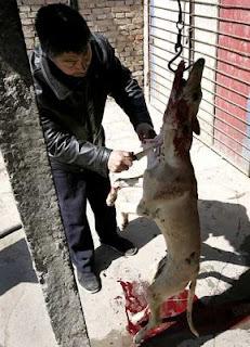 crueldad contra los animales