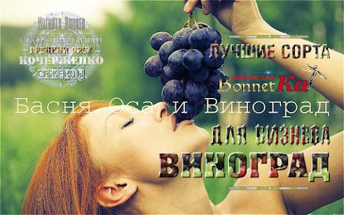 Лучшие сорта винограда для бизнеса в Украине