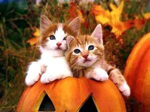 smiješne slike mačke Halloween