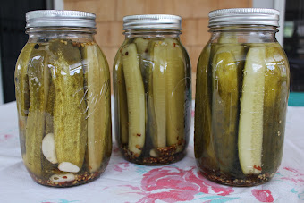 My Freshly Preserved Dill Pickles