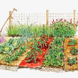 arti sayuran