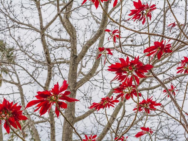 Australian winter flowers