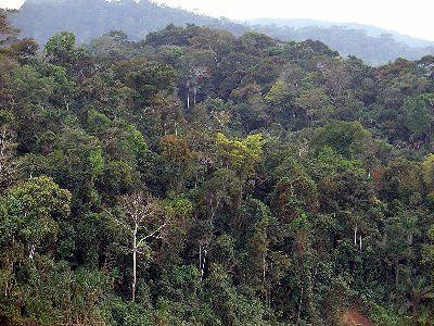 Las pluviselvas (selvas lluviosas tropicales) son los ecosistemas con mayor biodiversidad