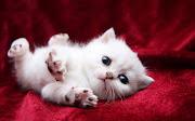 FOTOS DE ANIMAIS FOFOS (fotos de animais fofos )