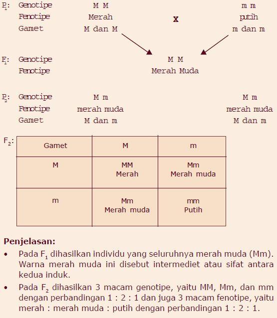 Contoh persilangan monohibrid dan dihibrid berpendidikan warna merah muda ini terjadi karena pengaruh gen dominan yang tidak sempurna kodominan untuk memperoleh f2 maka mendel menyilangkan sesama f1 ccuart Choice Image