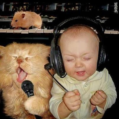 gato y mi bebé cascos