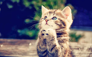 cat praying