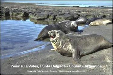 CHUBUT-ARGENTINA