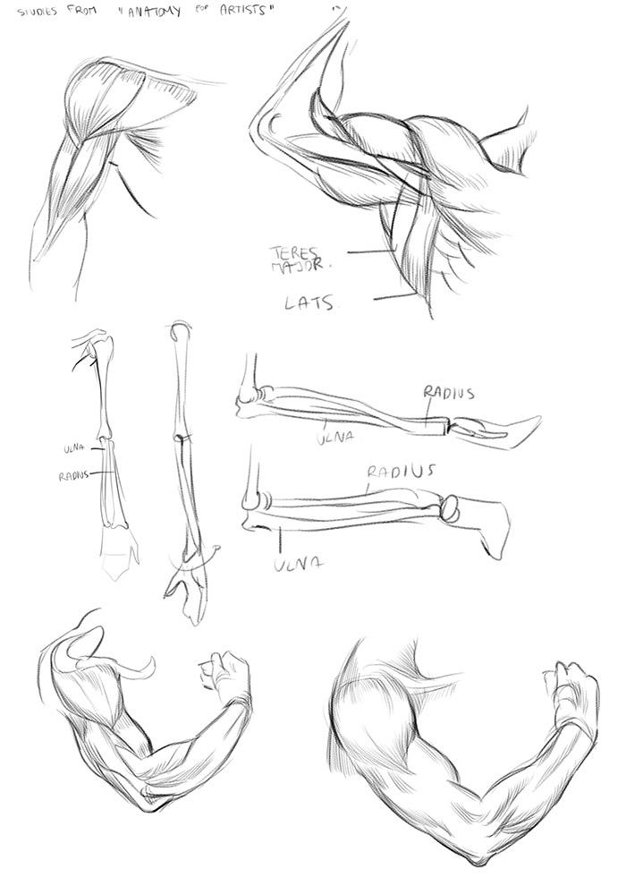 Life Drawing Dublin: Anatomy - Lower Arm Studies