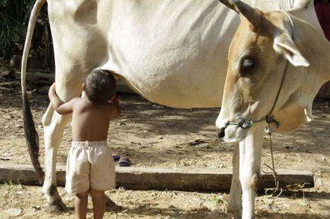3 Menyusu Dengan Lembu Selepas Ditinggalkan Ibu