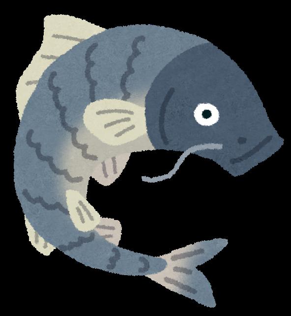 イラスト お魚 イラスト : 鯉のイラスト | かわいいフリー ...