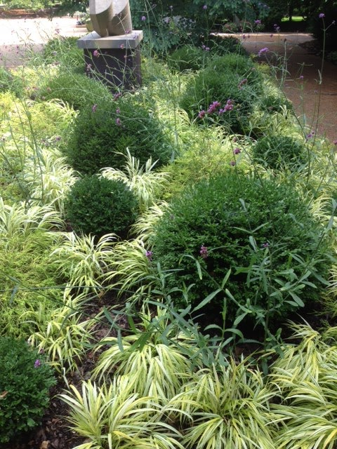 Garden Kaleidoscope At Olbrich >> Boxwood, Verbena bonariensis and Hakonechloa