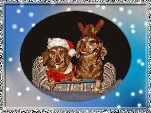 Merry Christmas, DaWeenies