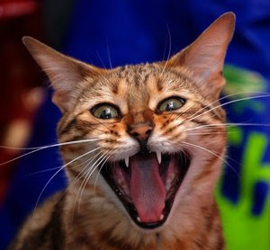 Teka teki lucu tebak tebakan lucu humor paling kocak bikin ngakak ketawa tertawa terbahak bahak dengan kata kata gokil