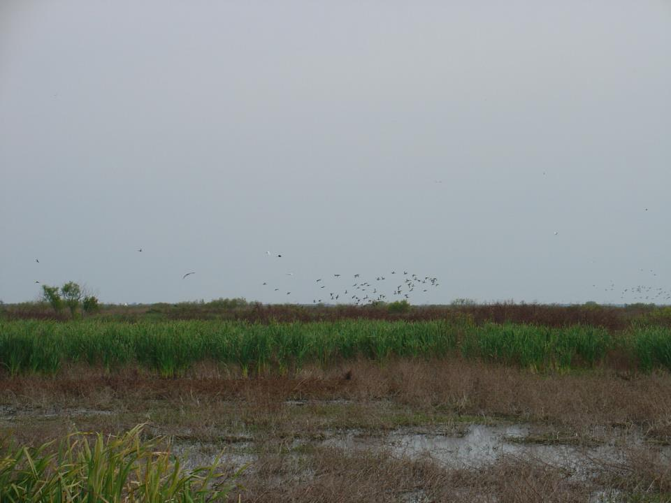 cattana wetland how to get there