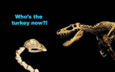 Ternyata Ayam Kalkun Keturunan Dinosaurus