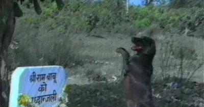 teri meherbaniyan dog picture