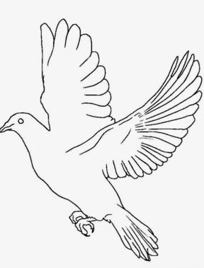 Mewarnai Burung Merpati Terbang
