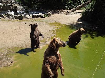 zoo de la Boissière du Doré, zoo, animaux, ours, bullelodie
