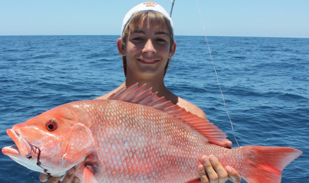 Show me the fish charters seeing red they 39 re fishing so hard for Deep sea fishing anna maria island