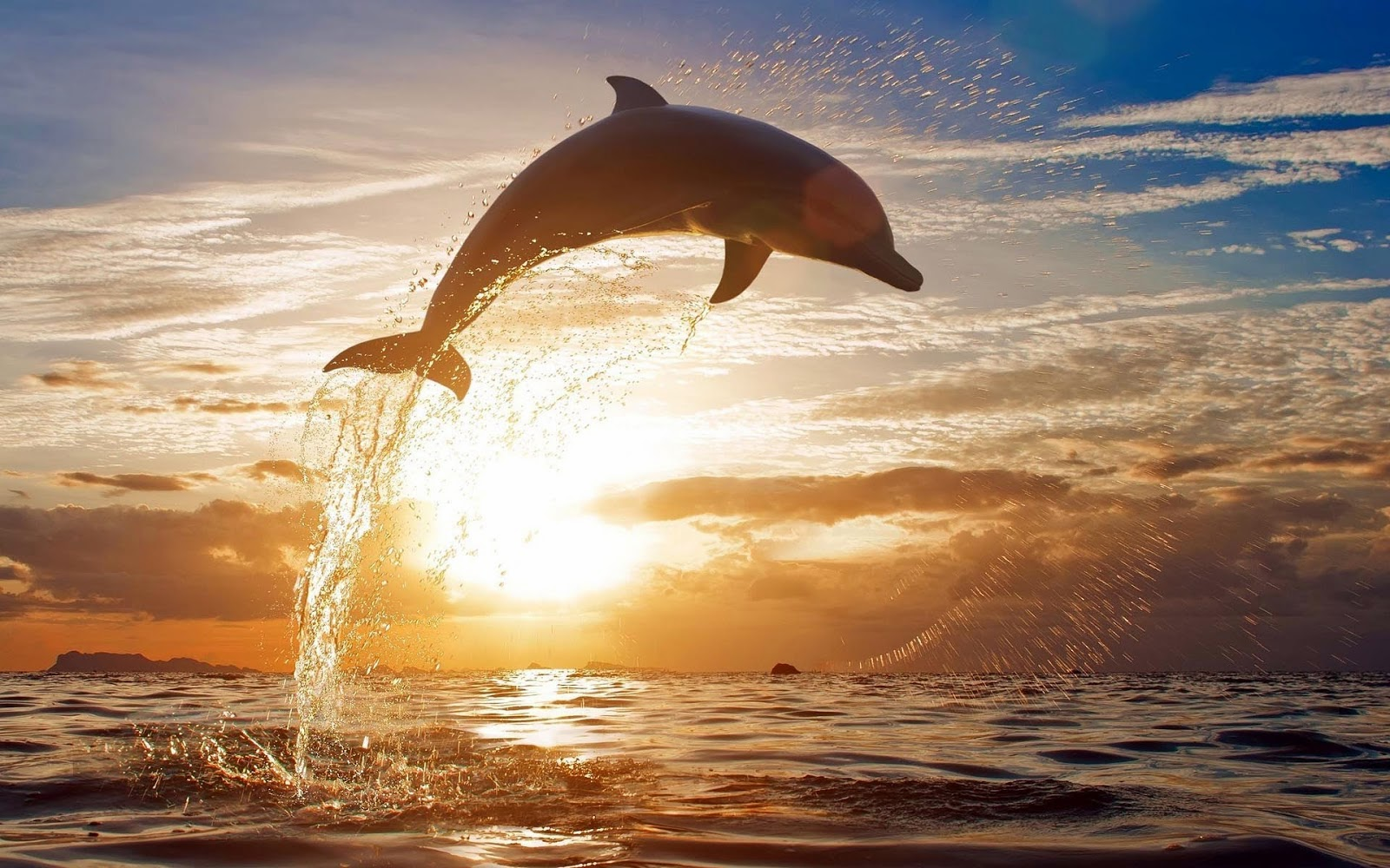 Dolphin hd wallpapers earth blog dolphin hd wallpapers voltagebd Image collections