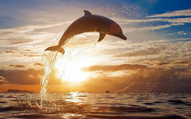 Dolphin hd wallpapers earth blog dolphin hd wallpapers voltagebd Gallery