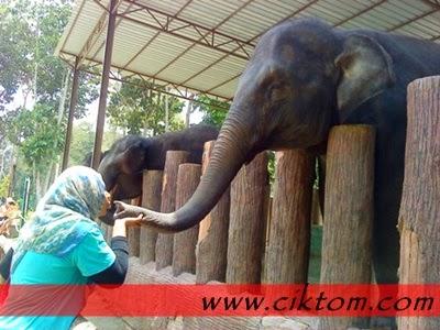 Tirah tiup belalai gajah