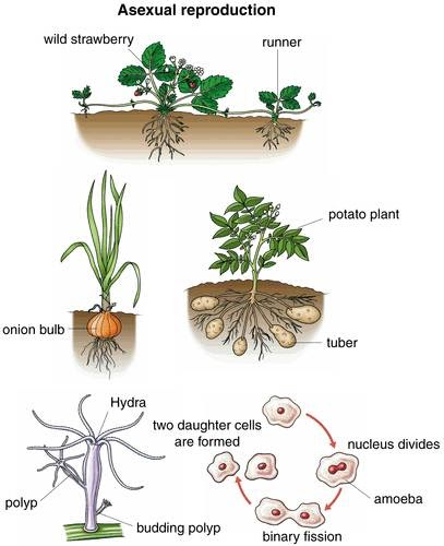 Sexual And Asexual Reproduction In Plants Manual Guide