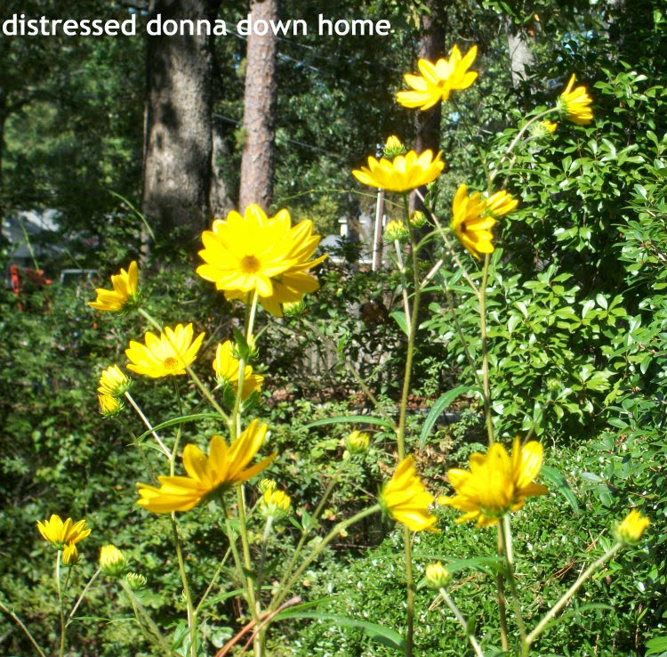 Distressed Donna Down Home: Mexican Sunflowers