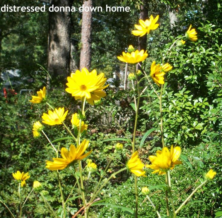 gardening, sunflowers