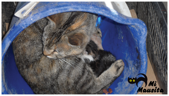 gatitos-recien-nacido