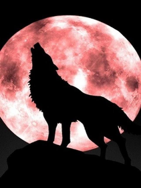 lobo y luna de sangre