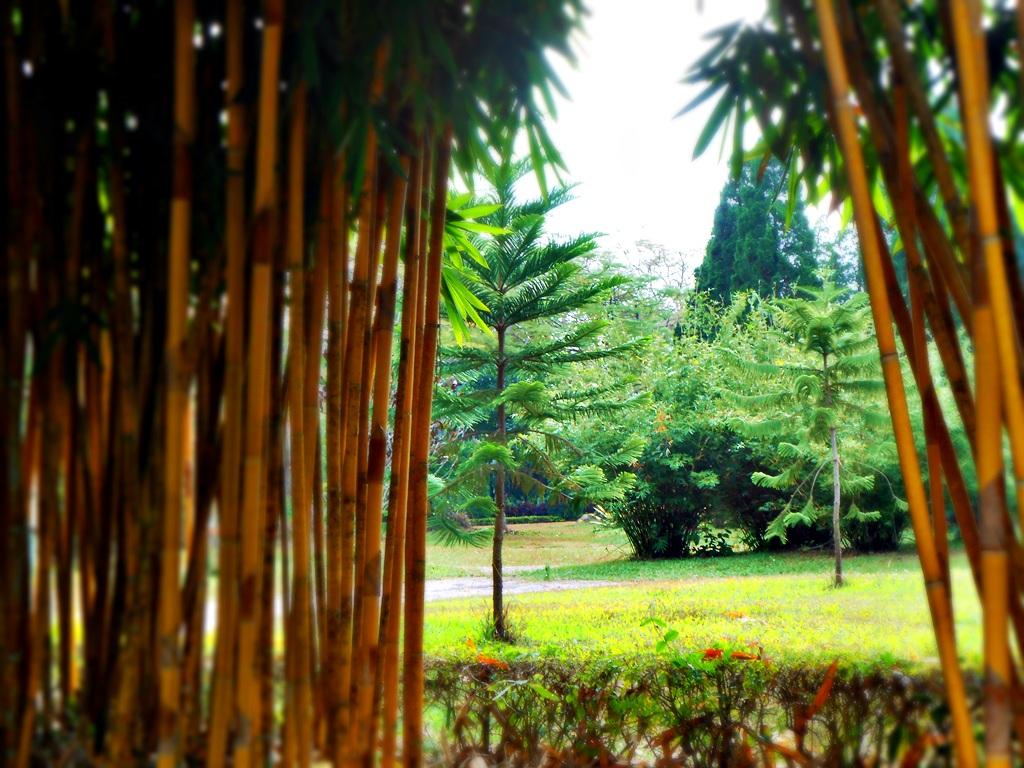 ต้นไม้ ใบหญ้า ป่าไผ่