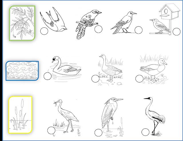 Раскраски перелетные птицы для детей - 4